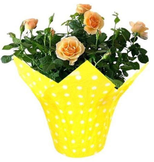Printing plant pot cover Flower pot sleeves flower pot covers